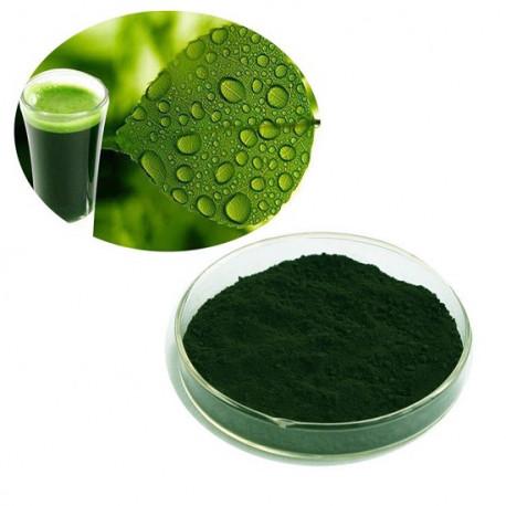 Краситель для сыра Хлорофилл, 50г, зеленый